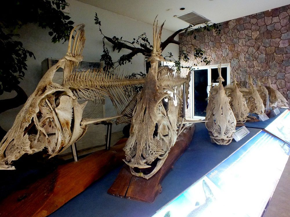 22 septembre 2018: Petite sortie à l'aquarium de Nong Khai