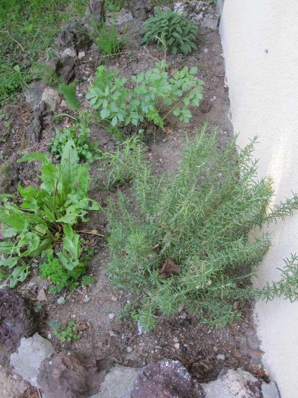 ... planter mon herbier