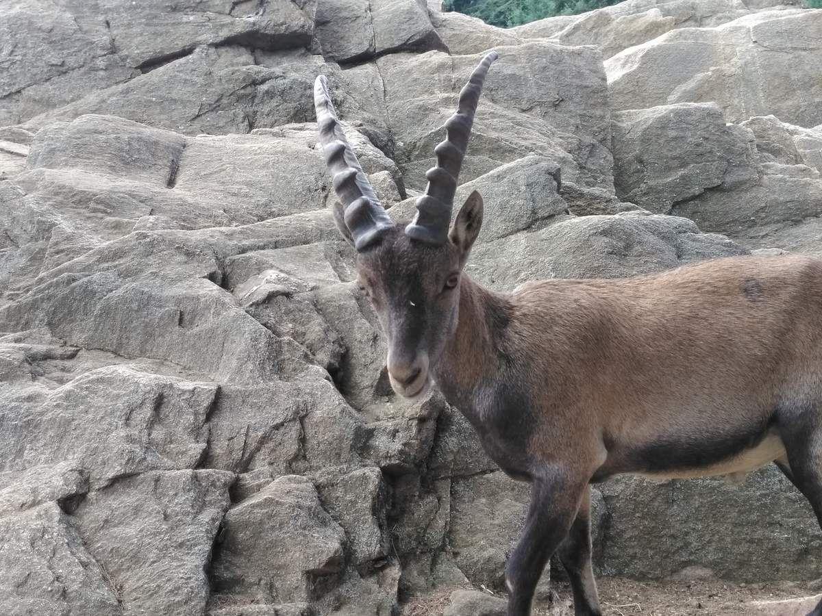 Parc Animalier d'Auvergne.