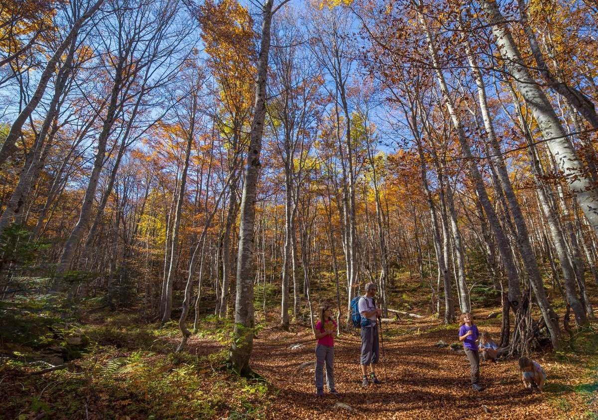 Une jolie forêt pour descendre mais un sentier passablement glissant (feuilles + rochers patinés)