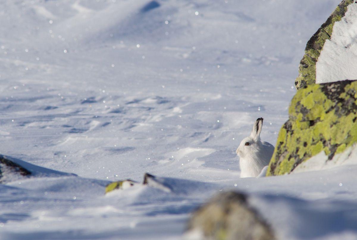 Un animal vraiment remarquable à observer et à photographier