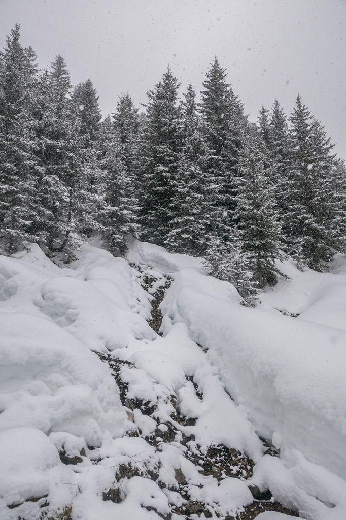 Nivôses du secteur : plus de deux-mètres au sol hors forêt à 1700 m d'altitude