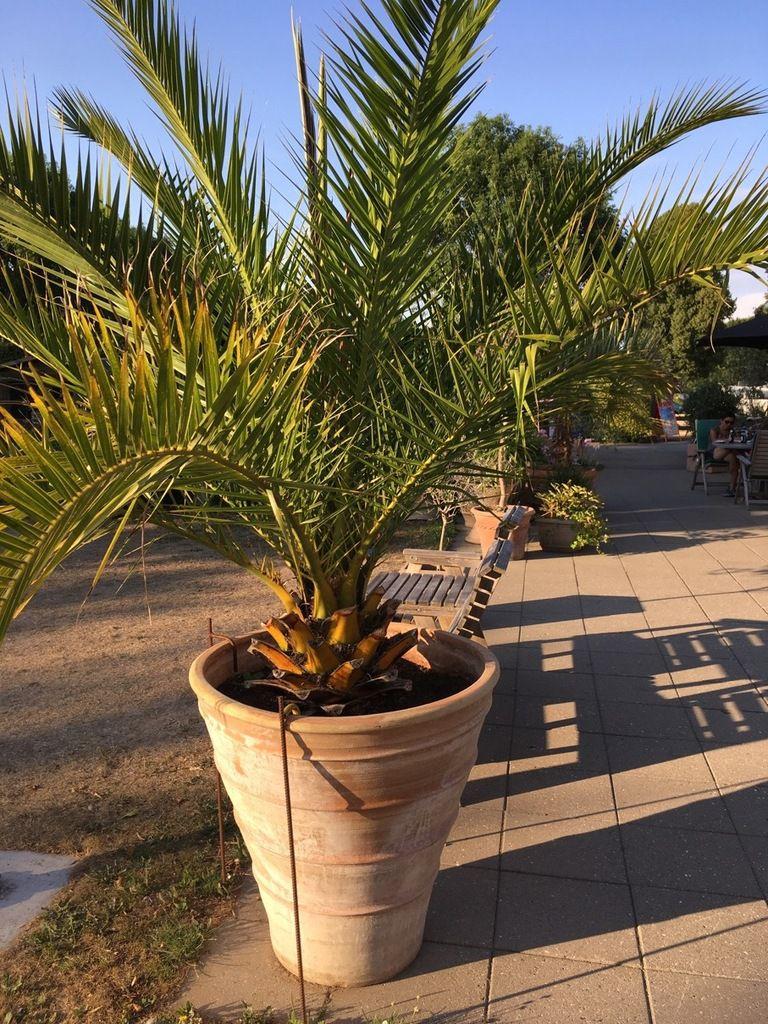 Camping aux airs méditerranéens