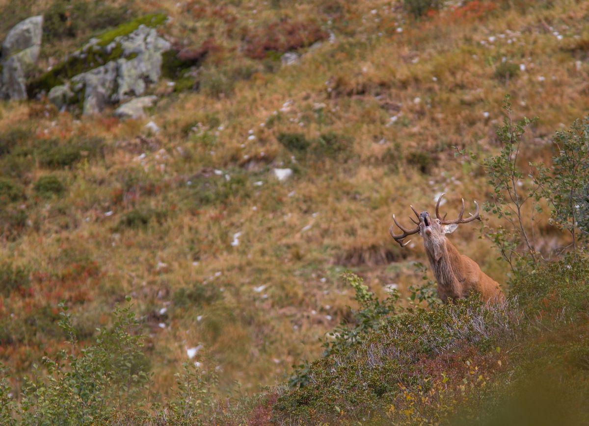 Super moment : ce cerf va m'offrir une proximité relative que je trouve parfaite pour les images.