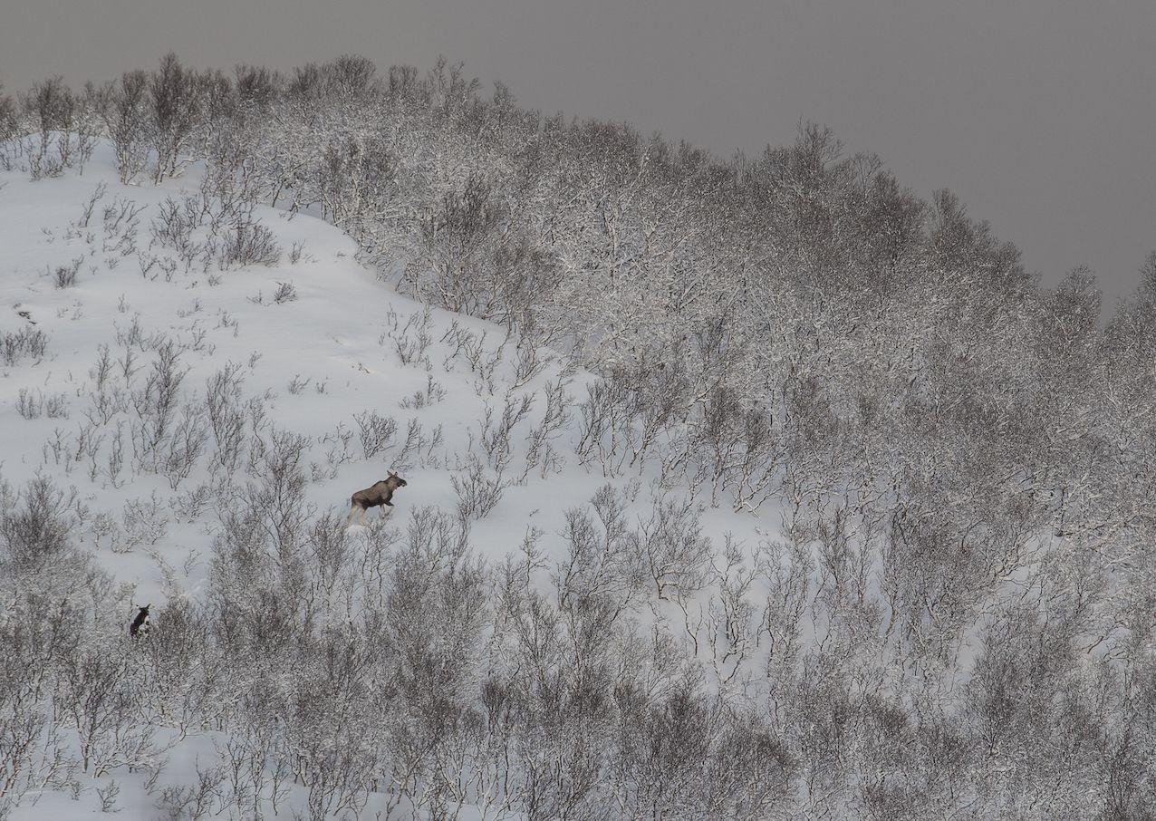 La vue depuis le Taskebyfjellet. Chercher les élans.
