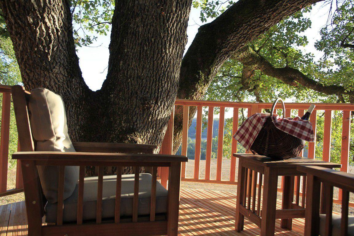 Bienvenue au creux de mon arbre ...
