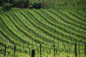 Piémont : avec les  plus grands vins du monde, ça vous dit quelque chose ?