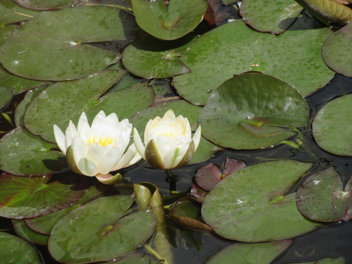 Dans mon coin il y a...le labyrinthe aux 1000 fleurs [test et avis].