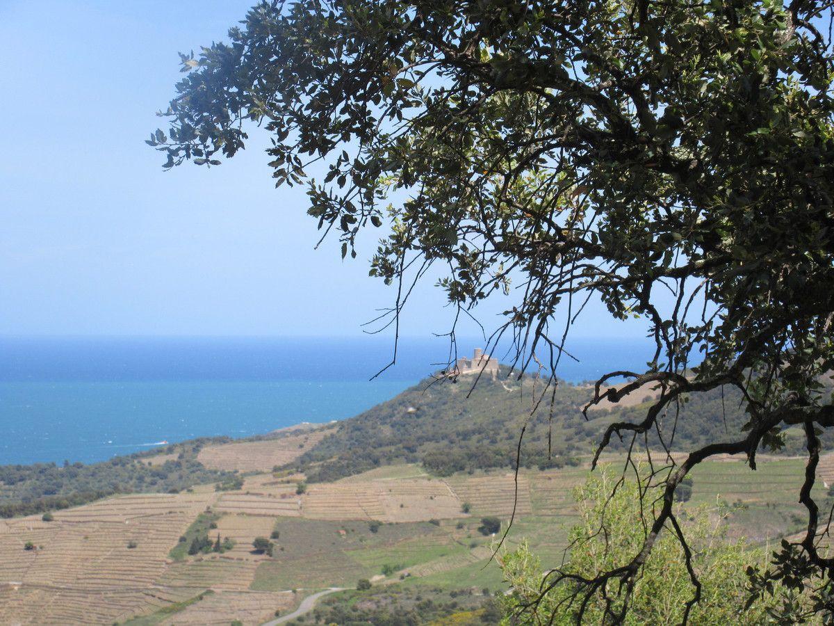 Dans mon coin il y a....une balade avec chèvres et moutons: l'ermitage de Collioure.
