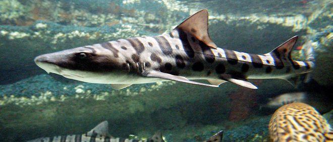 Méditerranée : la moitié des requins et des raies menacés d'extinction