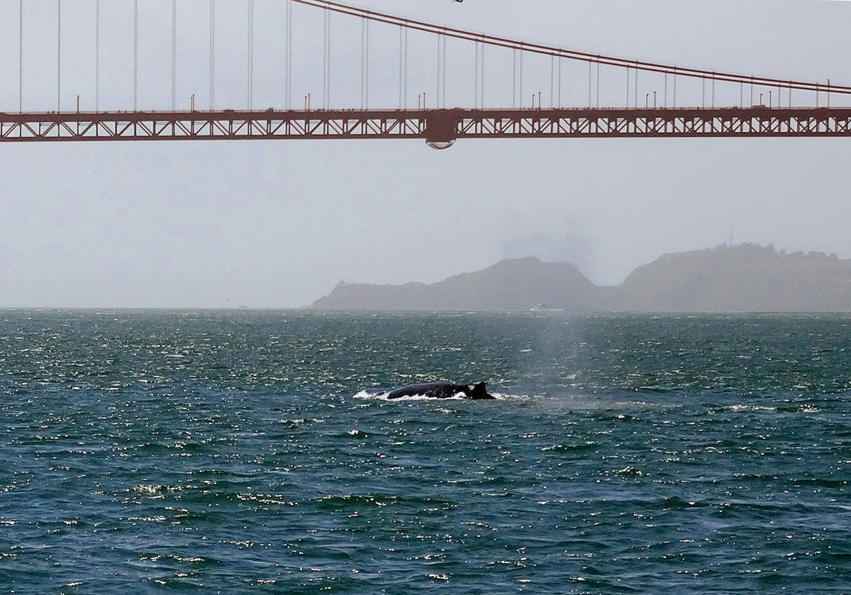 San Francisco Whale tour