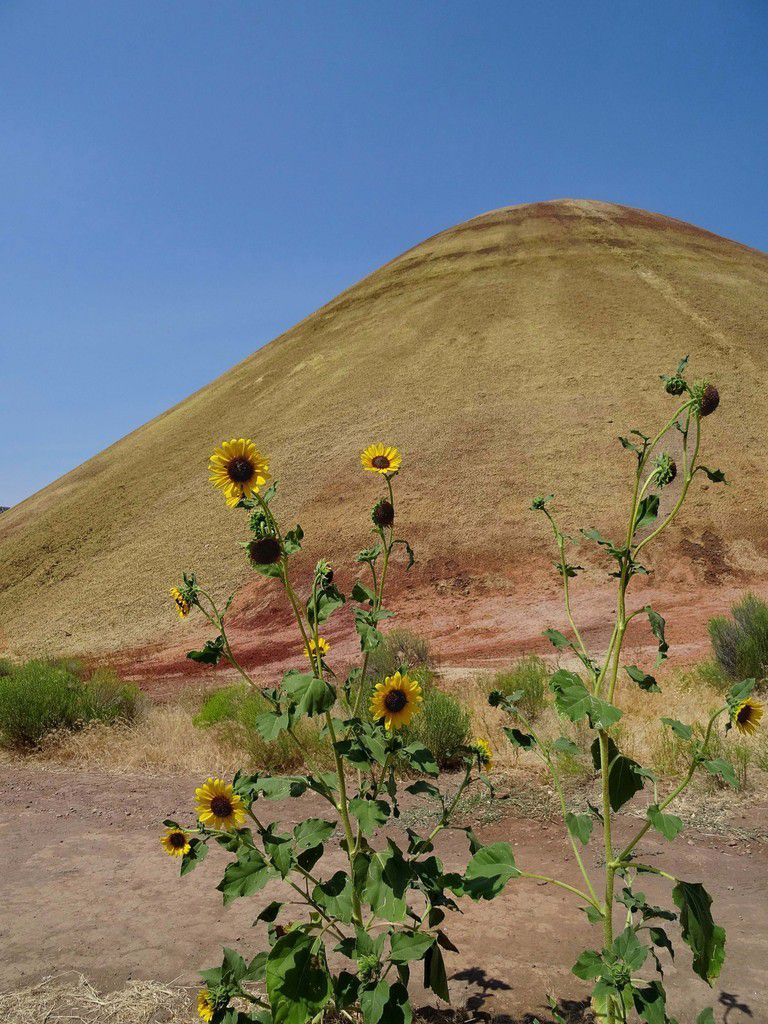John Day Fossil Beds Painted Hills