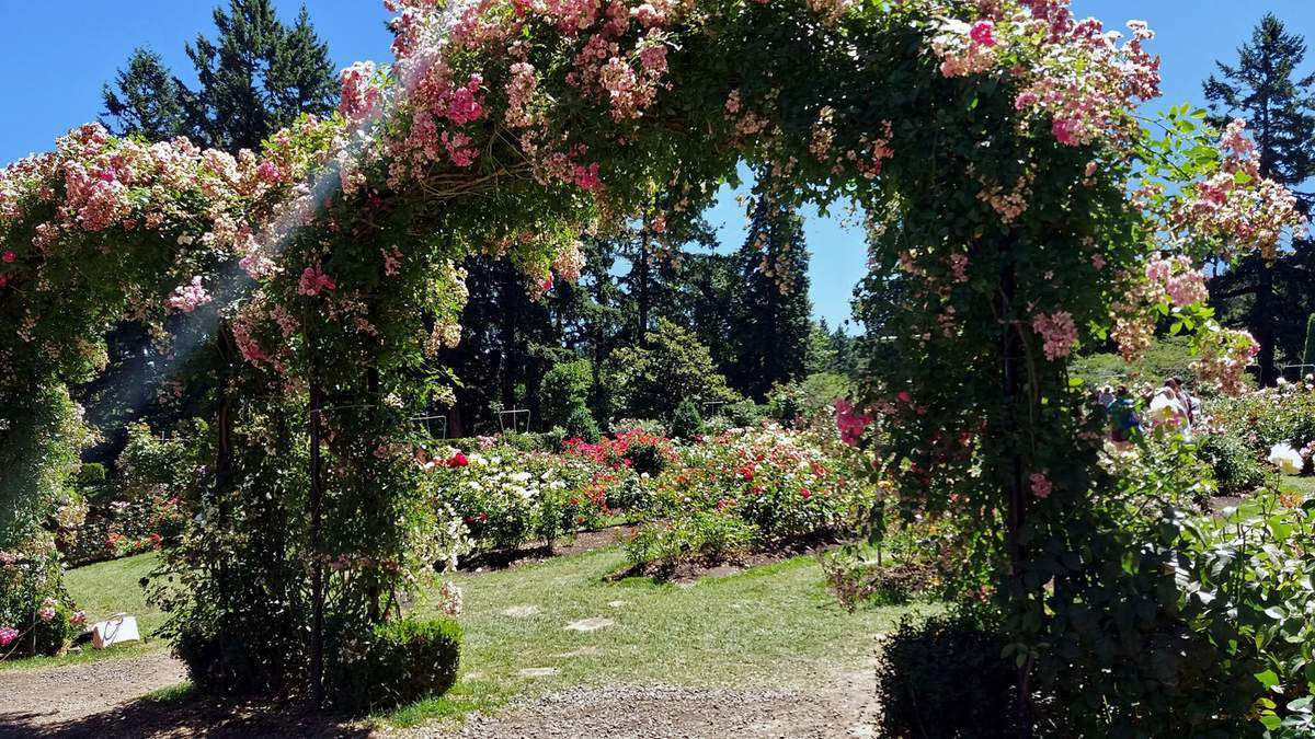 Portland Washington park International Rose Test garden