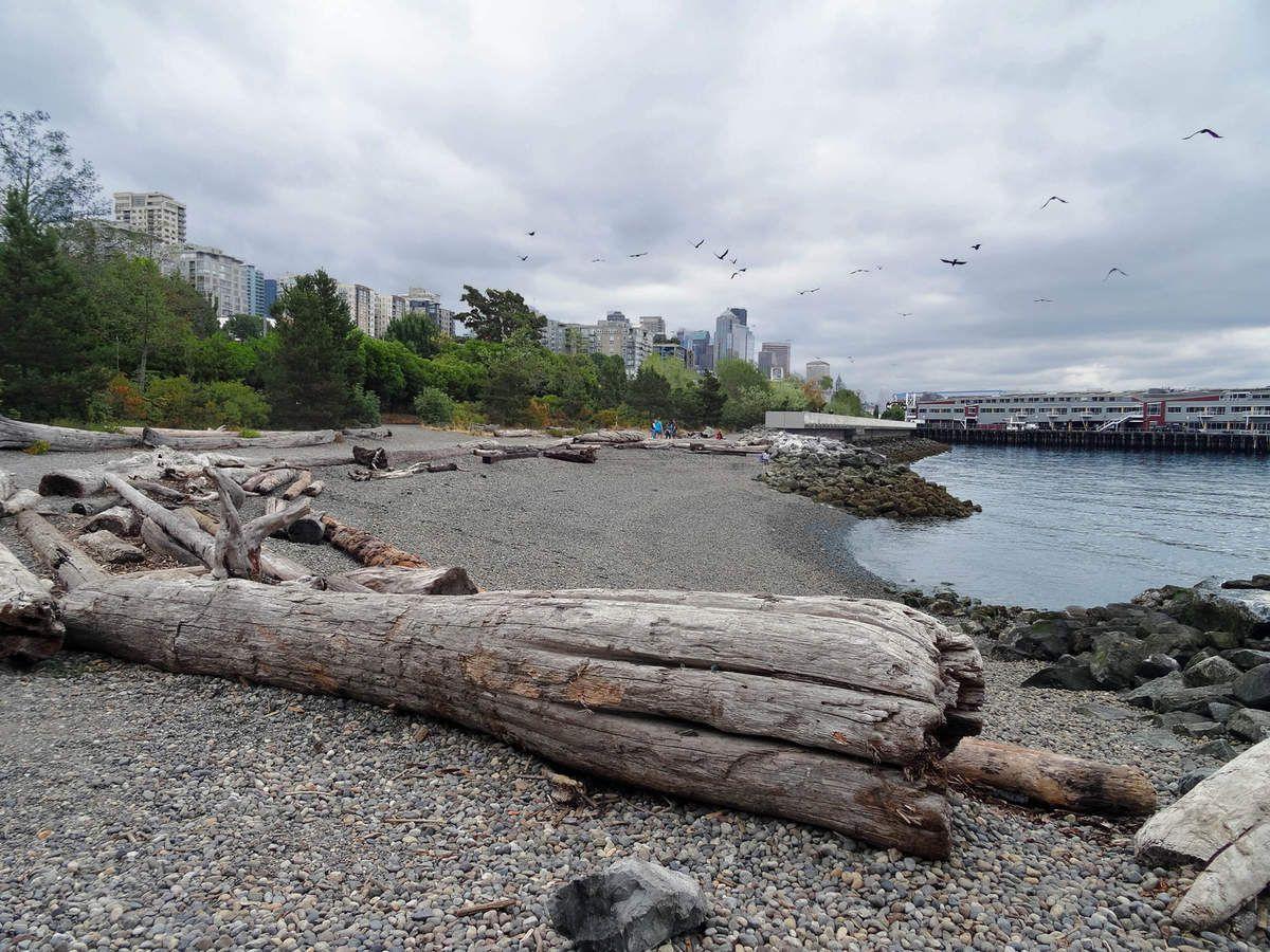 Seattle Olympic Sculpture Park Pocket beach