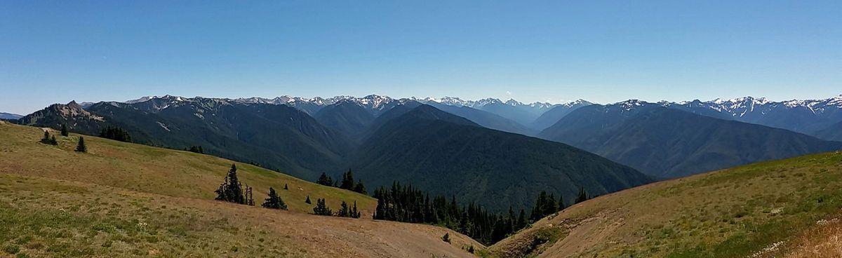 Olympic NP Hurricane Ridge Olympic Mountains