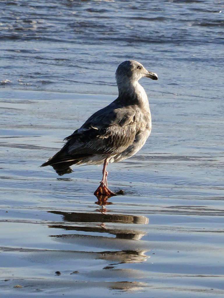 Olympic Park mouette