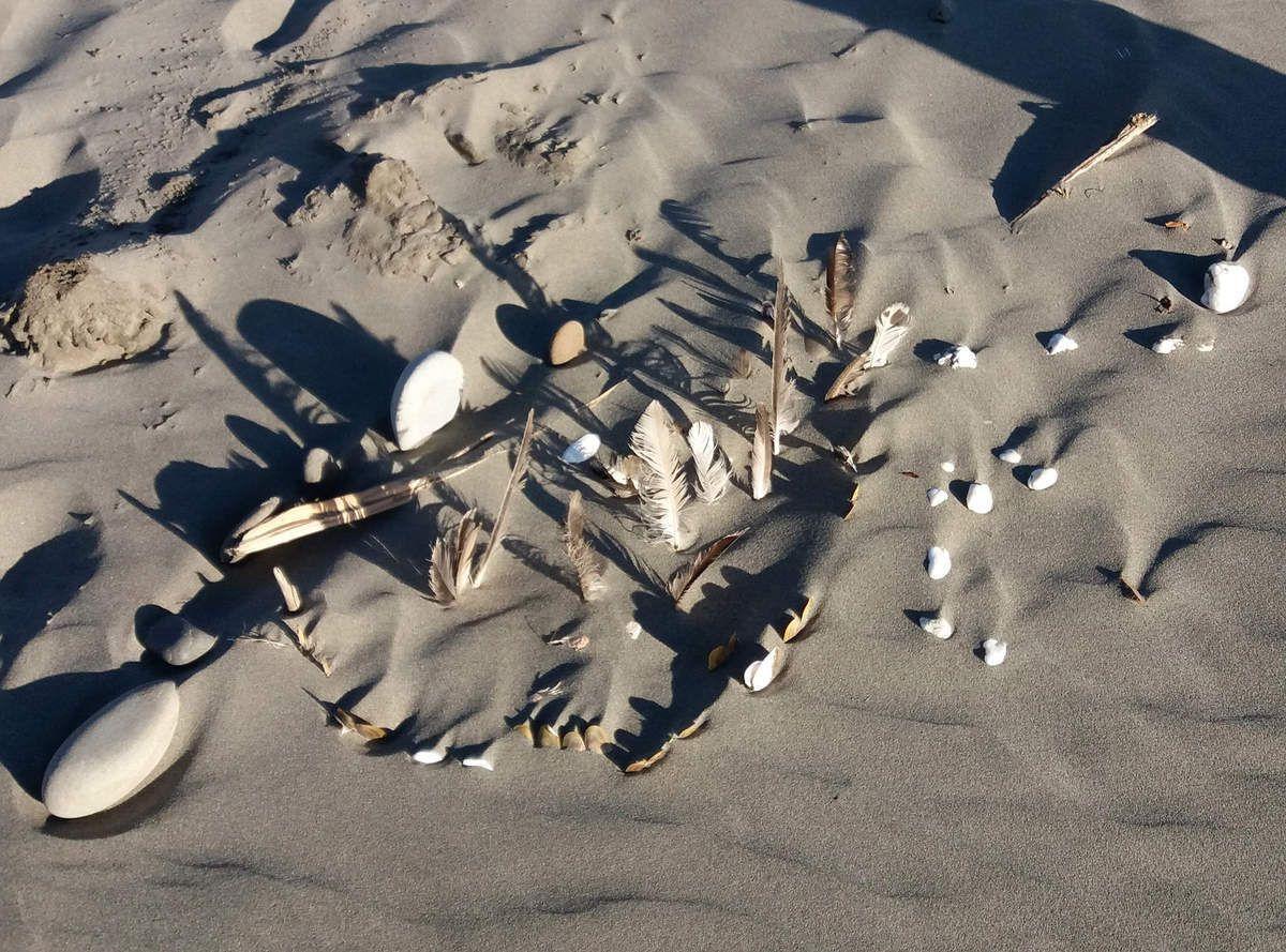 Olympic National Park Kalaloch Beach