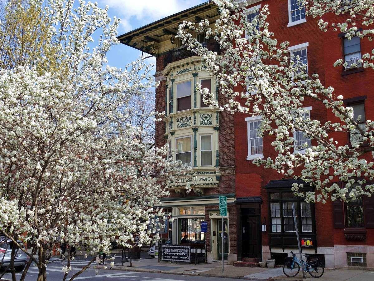 Philadelphie cerisiers en fleurs