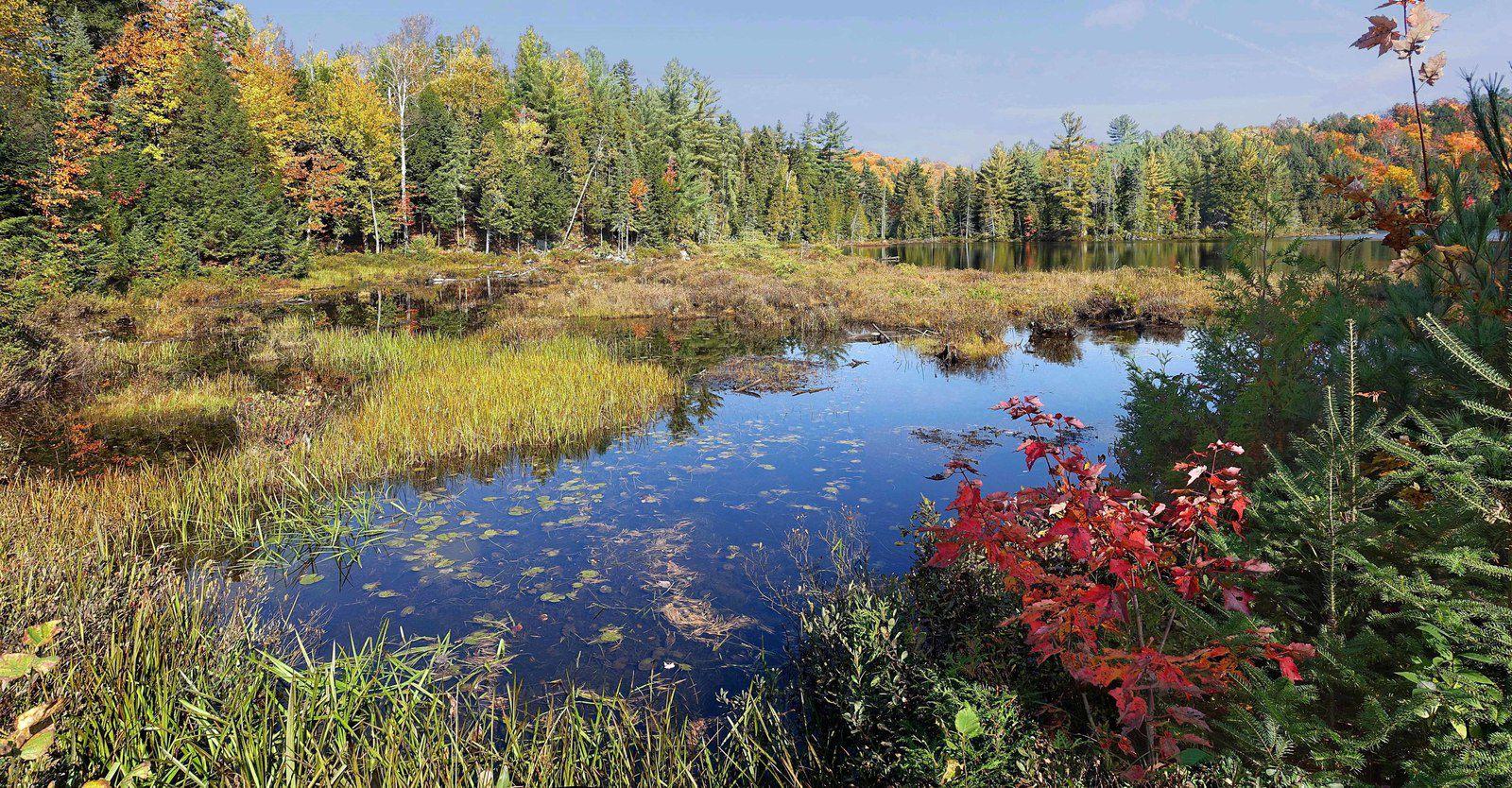 Lac Loutre tourbière