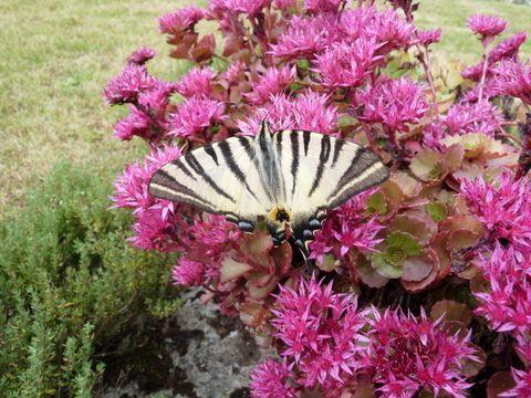 Papillon de juillet (Photo ex-libris.over-blog.com, dimanche 29 juillet 2012)