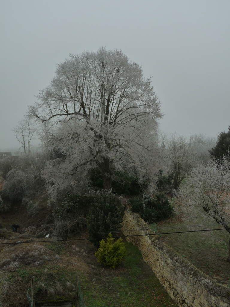 L'arbre sous mes fenêtres (Photo ex-libris.over-blog.com)