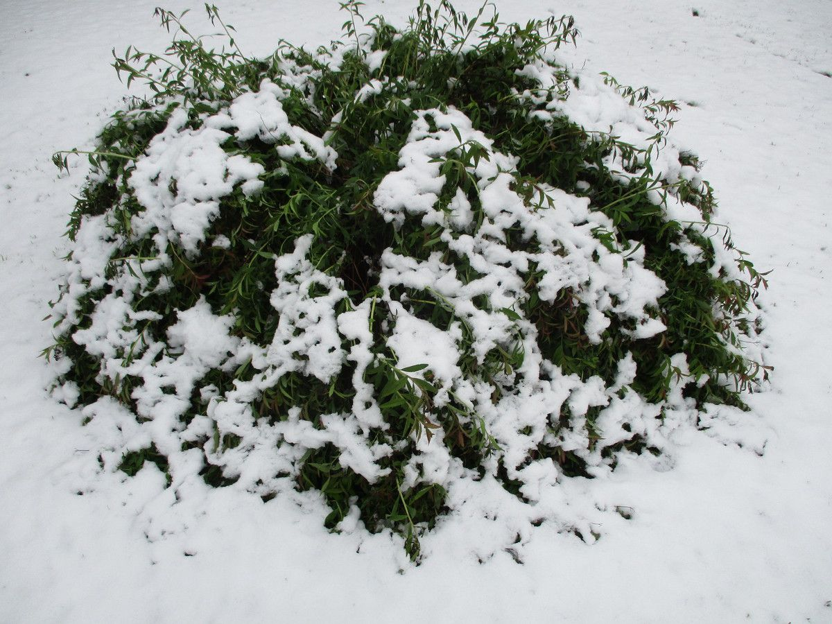 Quand l'hiver revient un 26 avril