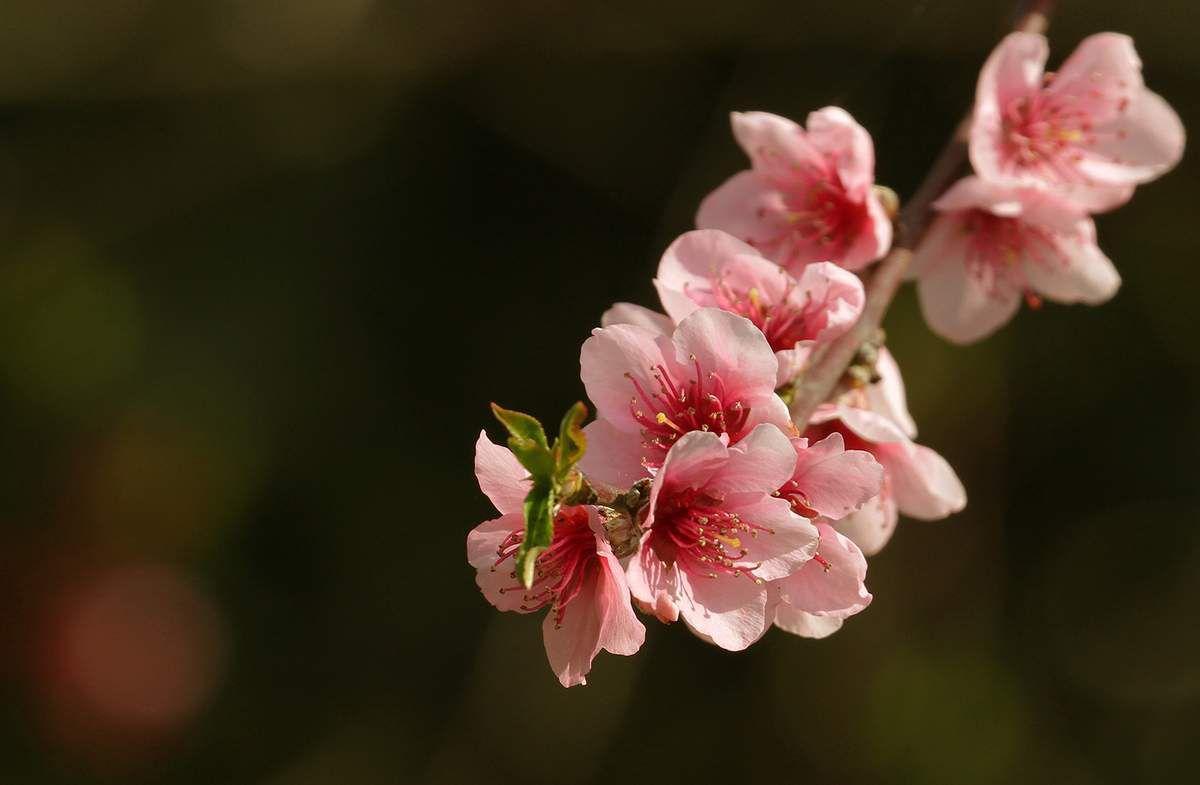 Quelques nouvelles du printemps