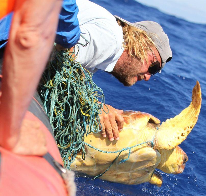 Des sauveurs de tortues marines (Marco, Madère)
