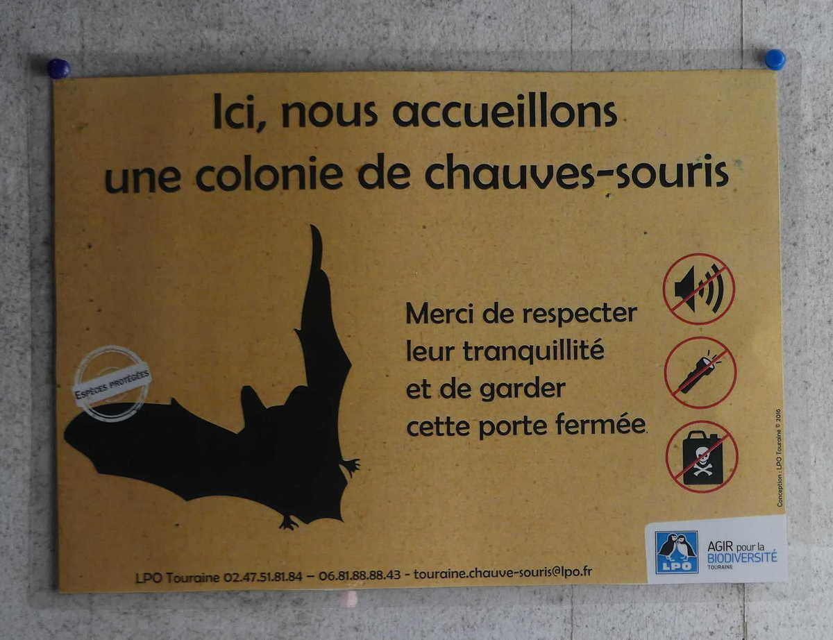 Saint-Paterne-Racan : Les chauves-souris bien protégées