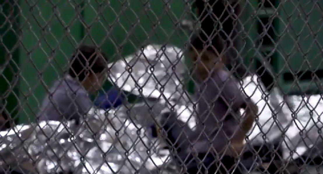 Estados Unidos: niños inmigrantes en jaulas de metal sometidos a traumas