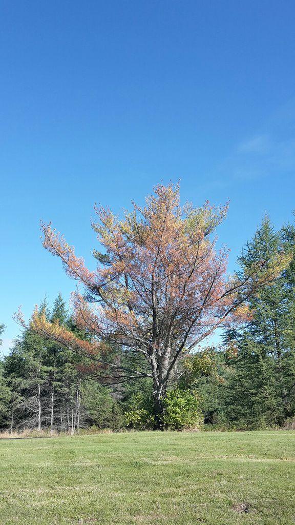 Canada : Celui qui traversait rapido le Nouveau Brunswick