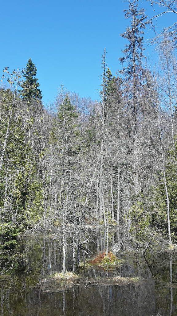 Canada - Celui qui se promenait dans la région des Grands Lacs (partie 2)