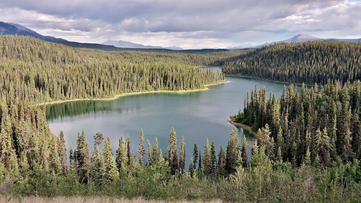 Canada - Celui qui campait à Whitehorse