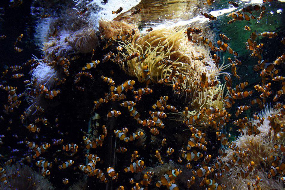 LE PRINCE DES OCEANS UN PRINCE VISIONNAIRE (2)
