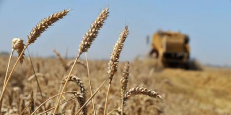Du trop bas prix des céréales au maïs toxique du port de Brest (Gérard Le Puill, 16 janvier 2017)