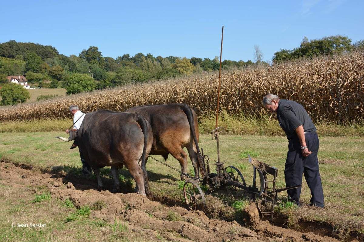 LAAS a égrené 50 années d'histoire du maïs