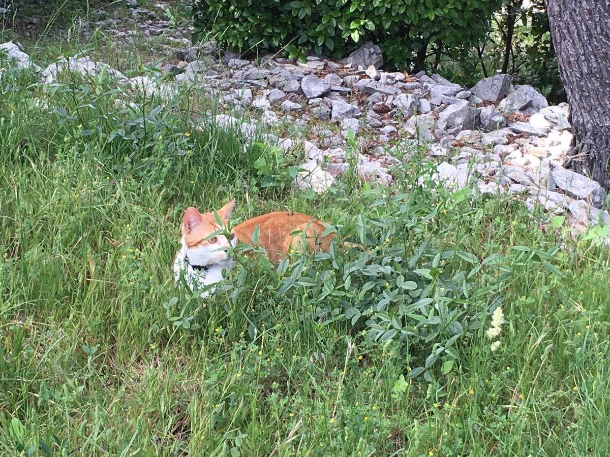 Joli chat roux sur la colline...