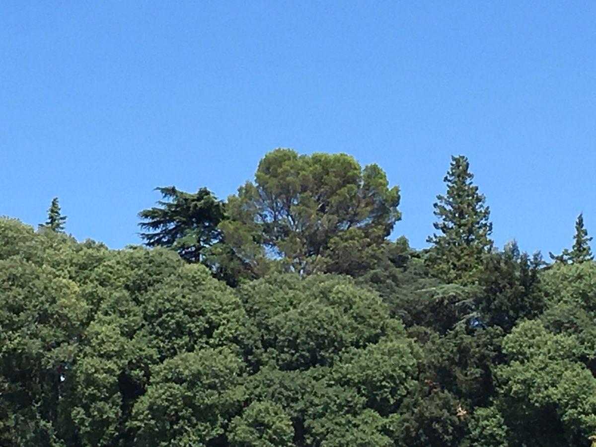 Forêts méditerranéennes...