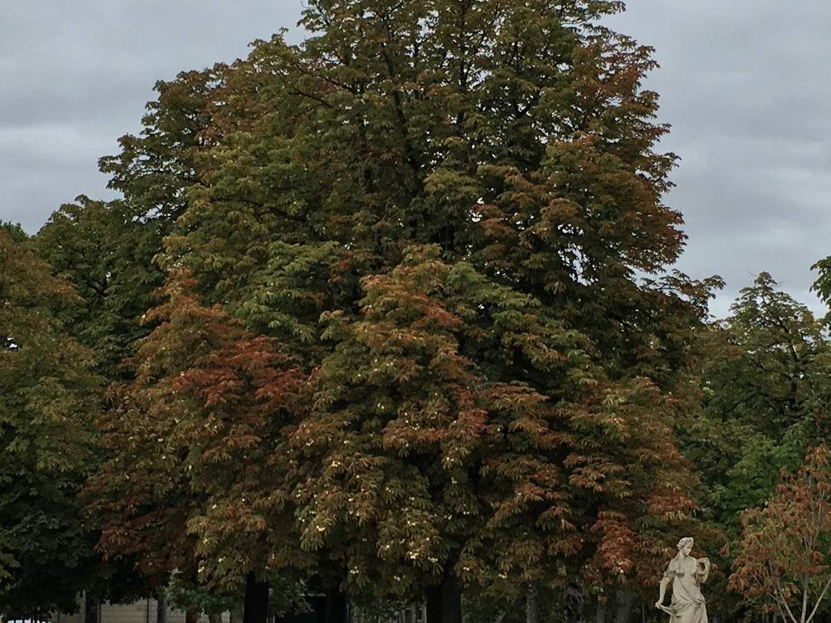 Douces lumières de l'automne...
