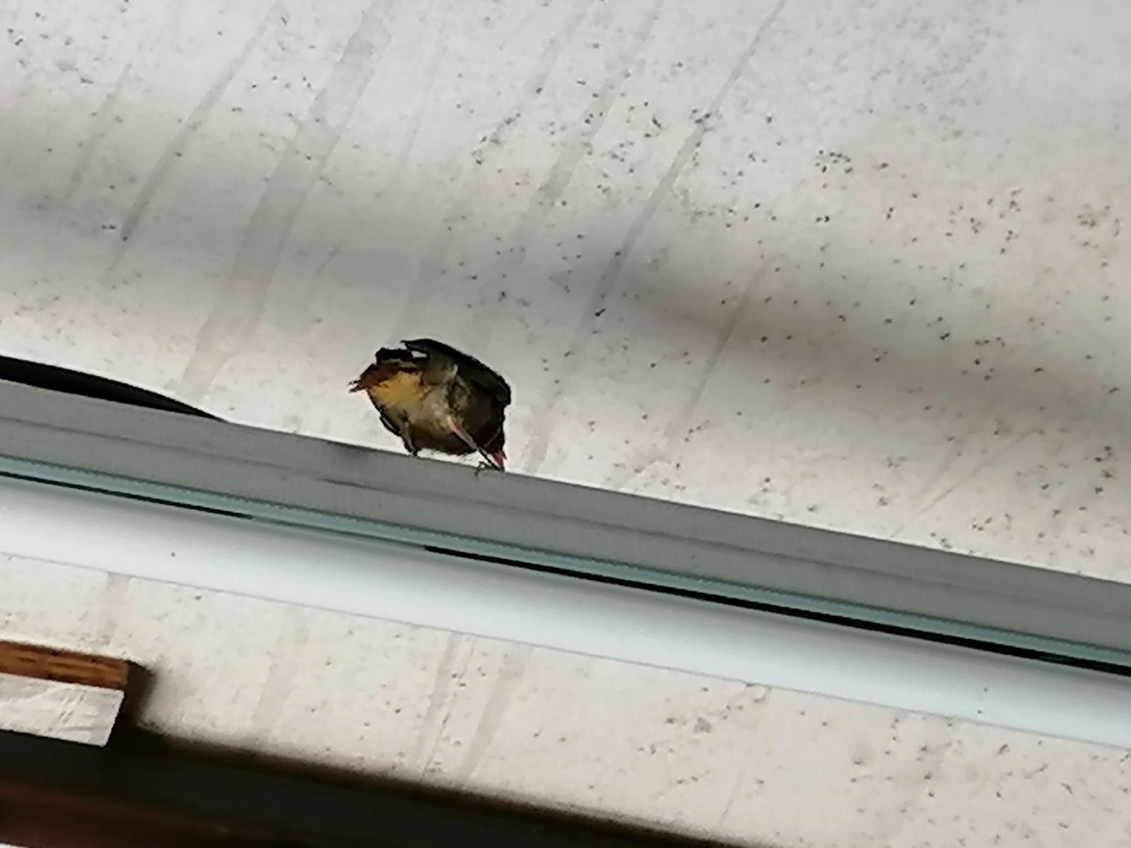 Le nid est vide... les Zoizeaux ont pris leur envol !!!