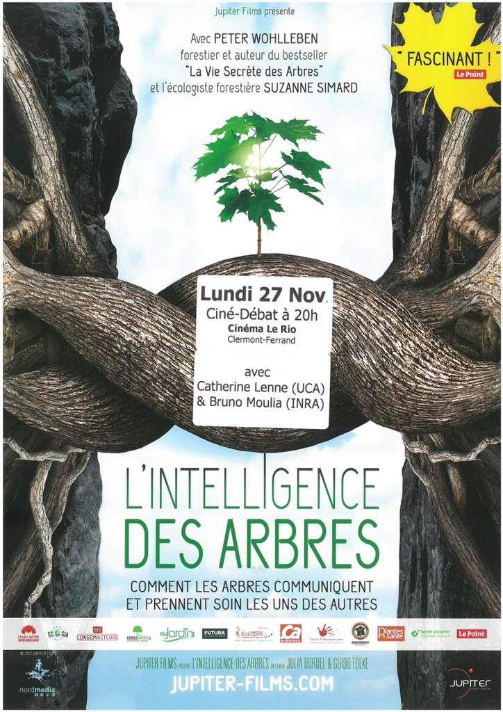 L'intelligence des arbres en question !