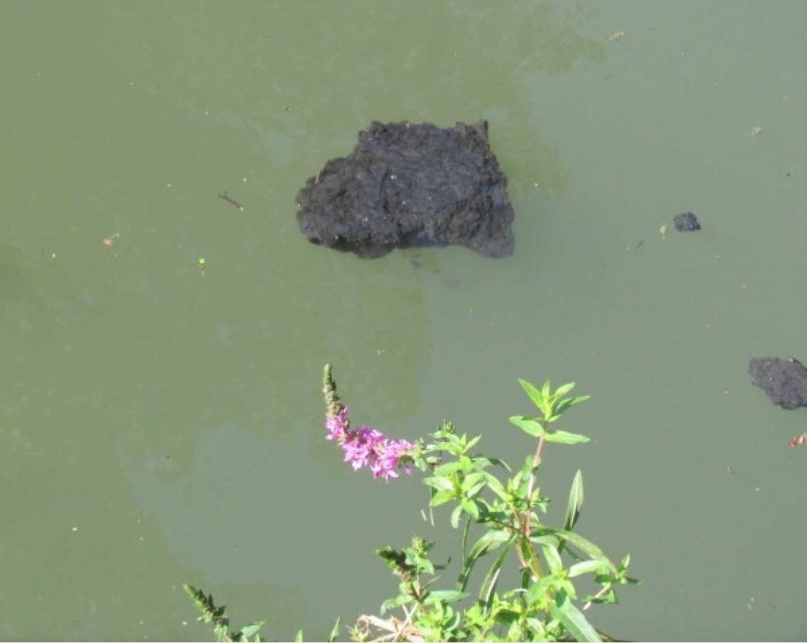 Les croutes de suie dans la Marne encore et toujours à Chelles dans le Bras des Ablettes !
