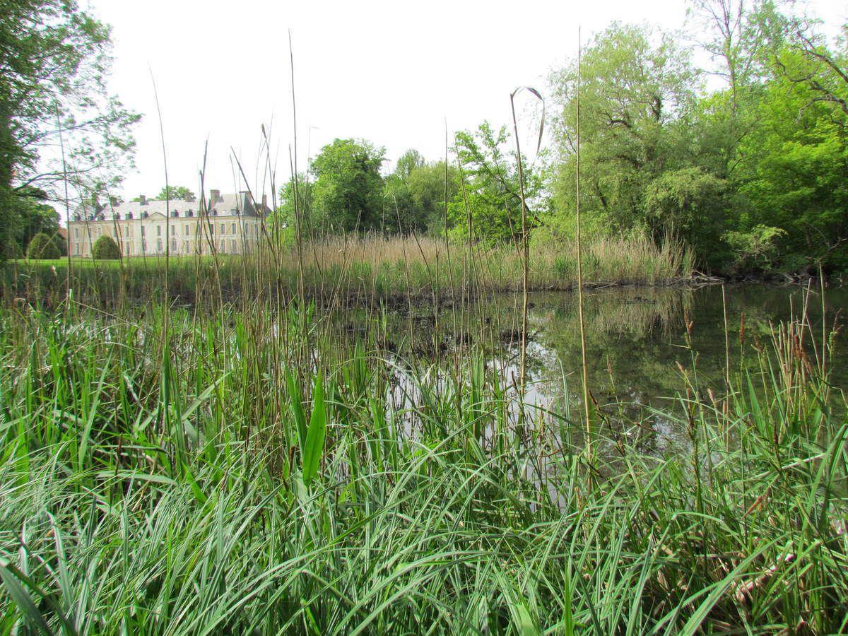 ru de Chantereine régulation des eaux pluviales et biodiversité