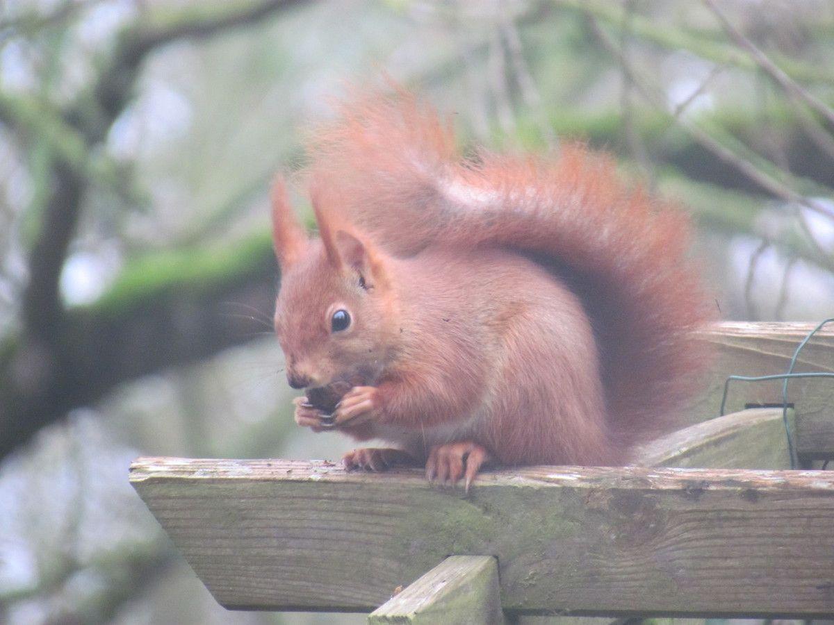 Le petit écureuil du bord de Marne au quai des îles de Chelles