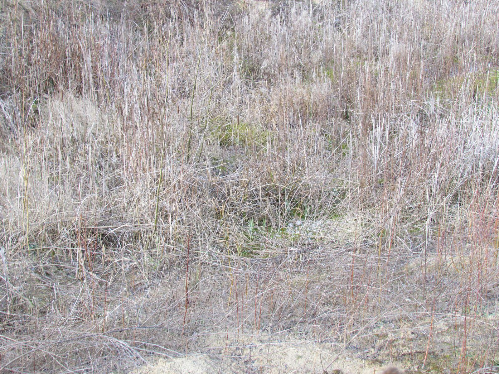 Les mares à batraciens sèches de la Base de Loisirs de Vaires