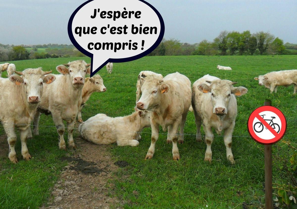 Lap'info Garenne