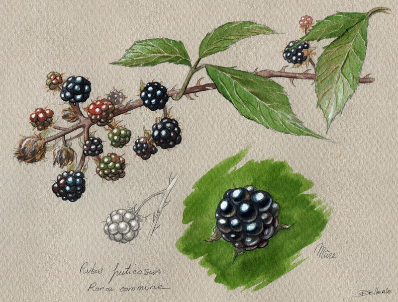 5. Illustrations culinaires