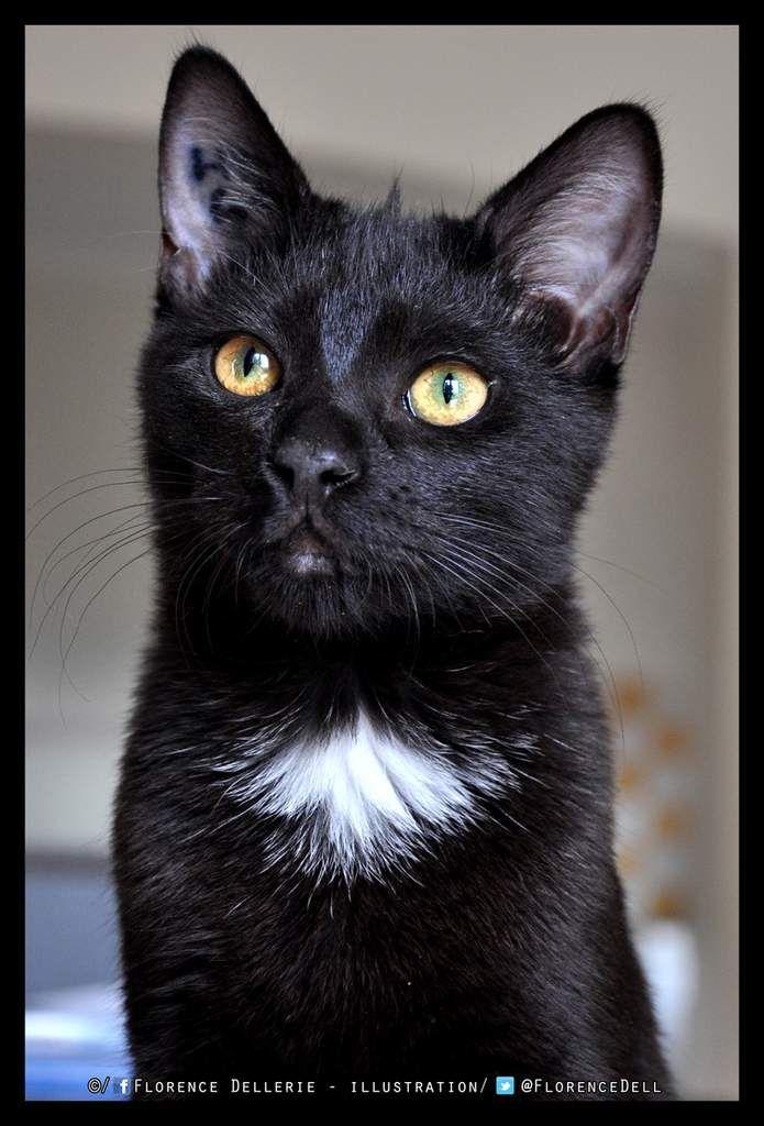 Les chats noirs méritent aussi d'être adoptés