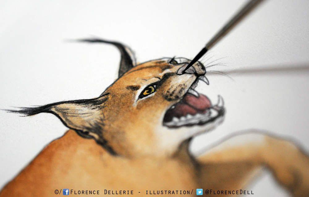Illustration de félin : Caracal à l'aquarelle