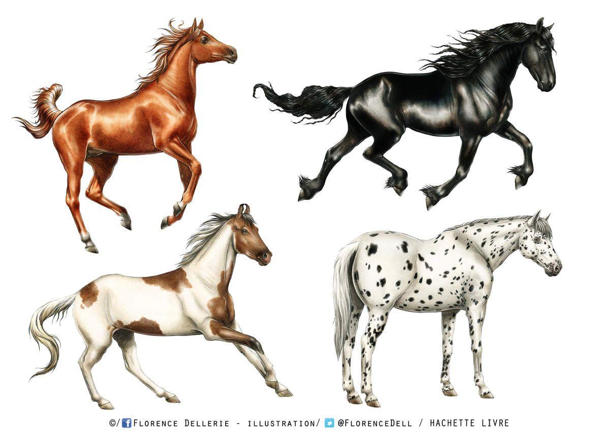 Illustrations documentaires : chevaux à l'aquarelle